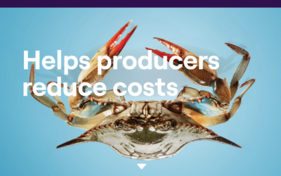There's no problem a big crab can't solve